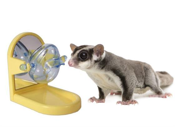 Toys For Sugar : Tip treat dispenser toys for sugar gliders exotic