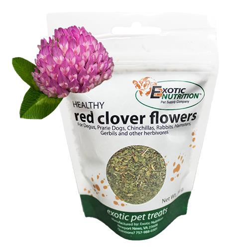 Red Clover Flowers