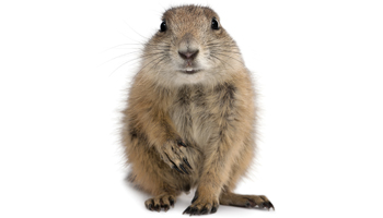 Prairie Dog Products