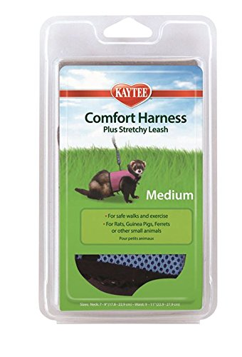 Harness & Leash KT1000795-19-20
