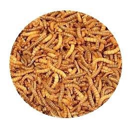 Small Live Mealworms 500 Pack