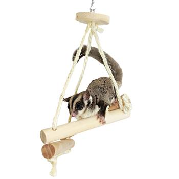 Sugar Glider on Jungle Trapeze