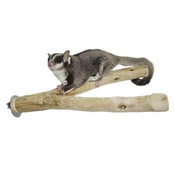 Sugar Glider on Natural Branch