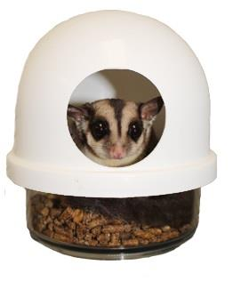 Sugar Glider in No Mess FeedingStation