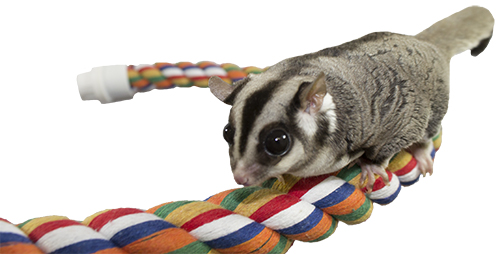 Sugar Glider on Flex Rope