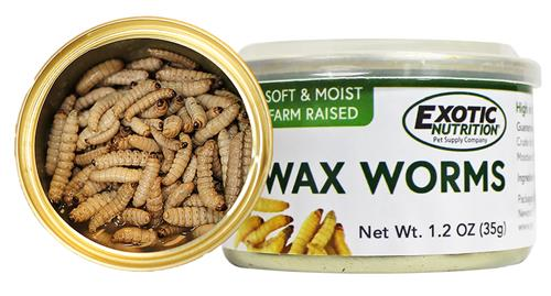 Canned Wax Worms