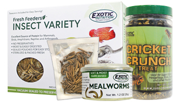 Canned & Dried Insects
