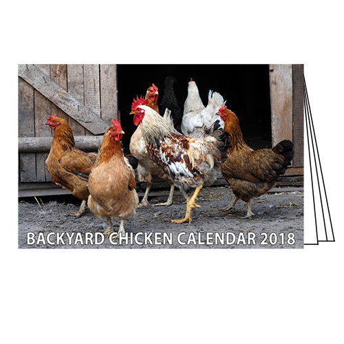 Backyard Chicken Calendar ENC109