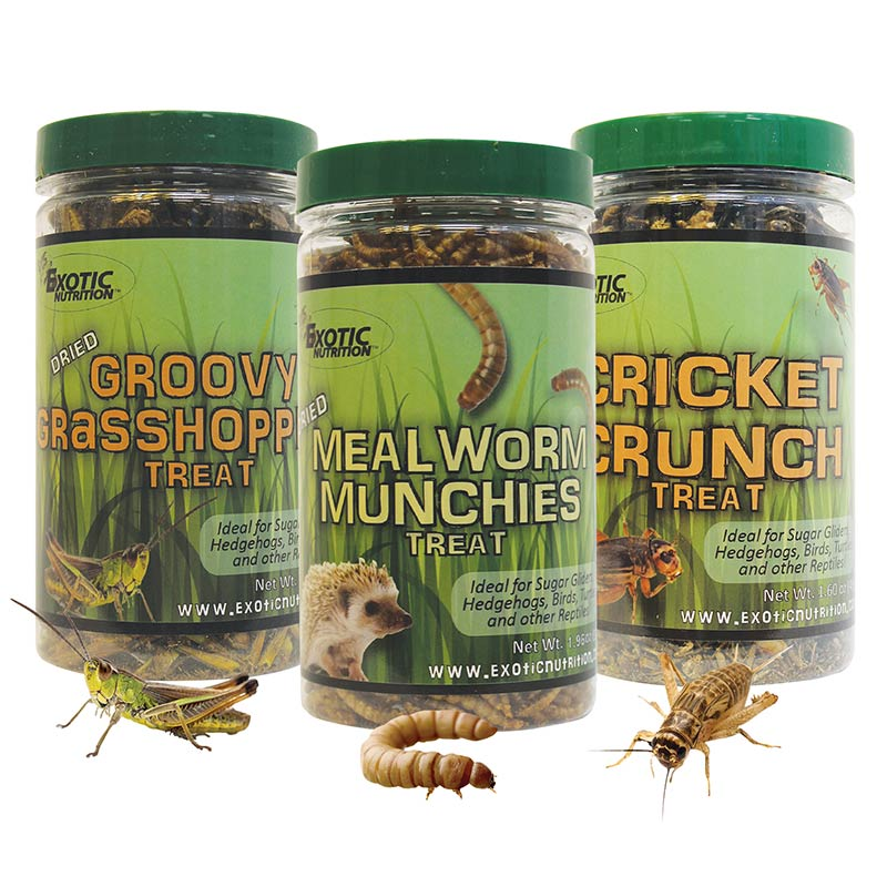 Dried Insect 3 Pack