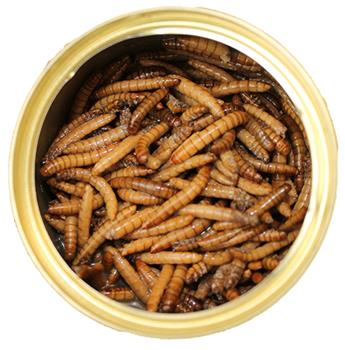 Canned Mealworms