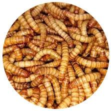 Large Live Mealworms 1000 Pack