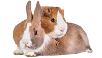 Rabbit & Guinea Pig Treats