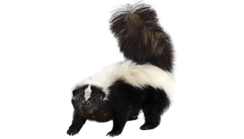 Skunk Treats