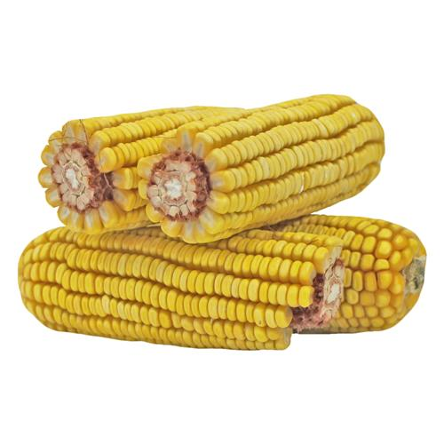 Corn On The Cob 38094013