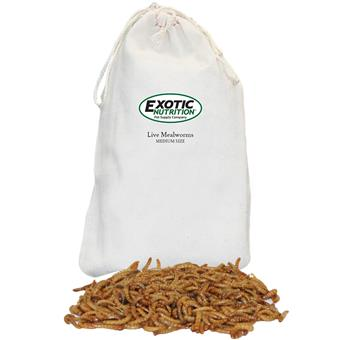 Medium Live Mealworms 500 Pack