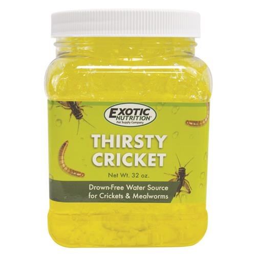 Thirsty Cricket (Water Source)